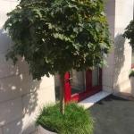 Благоустройство территории перед магазином малые архитектурные формы вазоны озеленение пример РостАрт 0008