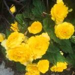 Работы по озеленению поставка цветов пример РостАрт 0026