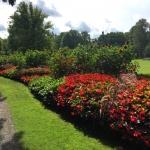 Ладшафтный дизайн работы по озеленению поставка цветов подсолнухи красные пример РостАрт 0024