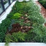Благоустройство озеление ландшафтный дизайн поставка цветов Москва 2017 102