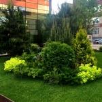 Благоустройство озеление ландшафтный дизайн поставка цветов Москва 2017