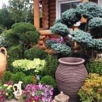 Поставка цветов благоустройство малые архитектурные формы цветочные композиции в вазонах Москва 2018 101