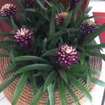 Работы по озеленению офисного пространства поставка цветов  в кашпо пример РостАрт 0030